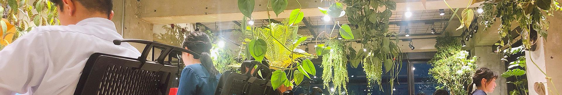 桌上型植物